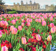 Blooming Tower of London by Michael Matthews