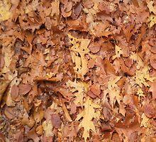 autumn by Robert Elfferich