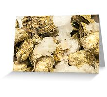 Fresh oysters on ice, seafood close-up Greeting Card