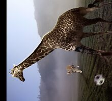 african animal soccer by NafetsNuarb