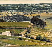 vintage vineyard landscape by saaton