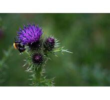 Bee life Photographic Print