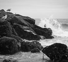 Seagulls and Breaking Waves on Rockaway Beach by W. Lotus