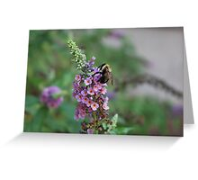 Bumble on a Butterfly Bush Greeting Card