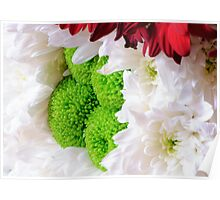 White and green flowers of chrysanthemum background Poster