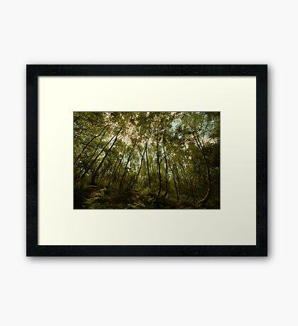 Wood Hall - Bowdown Woods Framed Print