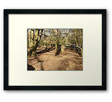 Forest, Jungle  Framed Print
