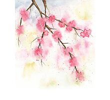Watercolor Painting of Cherry Blossoms Spring  Photographic Print