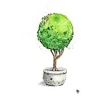 Watercolor Painting of a Green Topiary  Photographic Print