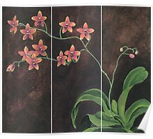 Orchid Painting Poster