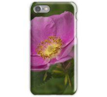 Swamp rose blossom iPhone Case/Skin