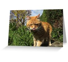 Ginger cat licking lips in garden Greeting Card
