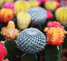 Cactus and Flowers - Pink Green Blue Yellow  by sitnica