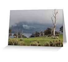 Oatlands countryside with wedge tailed eagle  Greeting Card