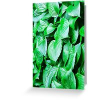 large green leaves closeup Greeting Card