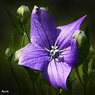 The flower and the fly  by John44
