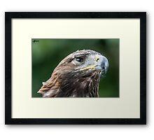 Golden Eagle profile Framed Print