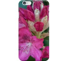 Giant pink petals rhododendron flower – Leigh Hill Surrey iPhone Case/Skin