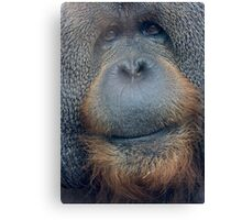 Orangutang Face Canvas Print