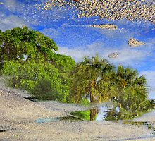 Reflection of Trees in Puddle by kfisi