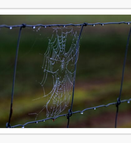 Fence Web in the Morning Dew Sticker