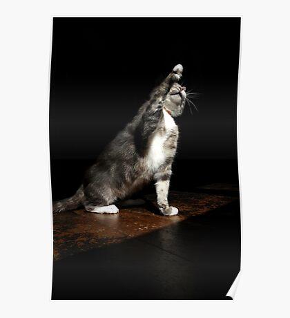 Overdramatic cat Poster
