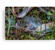 Dewy Ground Web Canvas Print