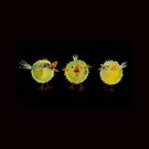 The Amazing Tumble Chicks! by Maria Louise Moore
