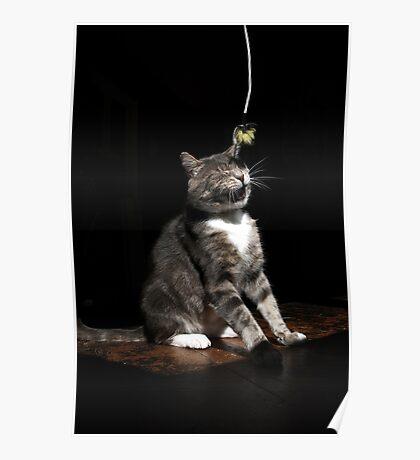 Ticklish cat Poster