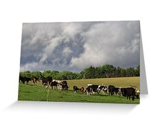 Lovely Livestock Greeting Card