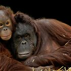 Infant Orangutan and Mum by JMChown