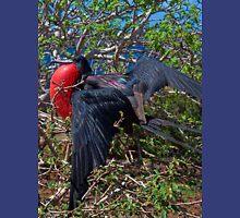 Ecuador. Galapagos Islands. Frigatebird. Unisex T-Shirt