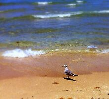 Seagull on the Beach by kfisi