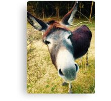 Curious Donkey Canvas Print