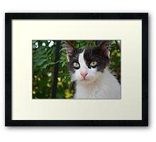 Monastary Cat Framed Print