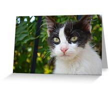 Monastary Cat Greeting Card