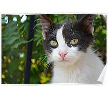 Monastary Cat Poster