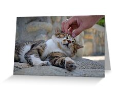 Afternoon Affection Greeting Card