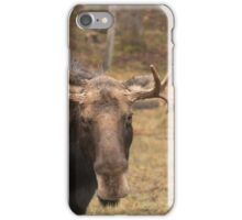 Bull moose in a fall landscape iPhone Case/Skin