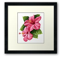 Hibiscus Flowers with Leaves Framed Print