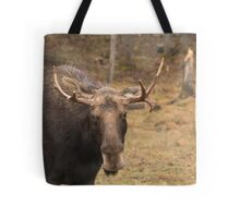 Bull moose in a fall landscape Tote Bag