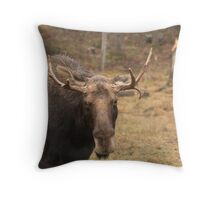 Bull moose in a fall landscape Throw Pillow