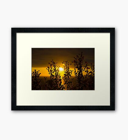wild atlantic way sunset through wild flowers Framed Print