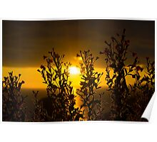 wild atlantic way sunset through wild flowers Poster