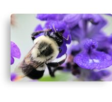 Soggy Bumble Canvas Print