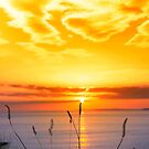 wild tall grass on the wild atlantic way orange sunset by morrbyte