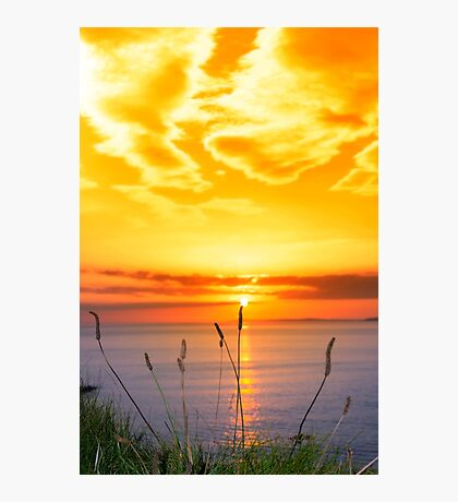 wild tall grass on the wild atlantic way orange sunset Photographic Print