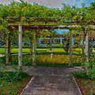 Botanical  Gardens paget Bermuda.. by buddybetsy