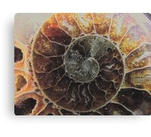 ammonite supermacro Canvas Print