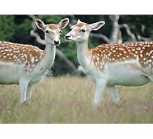 Female Fallow  Photographic Print